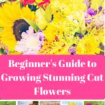 cut flowers, garden